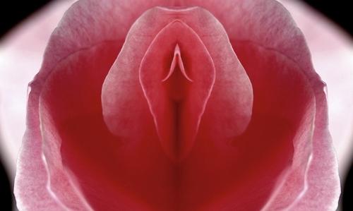 Vagína