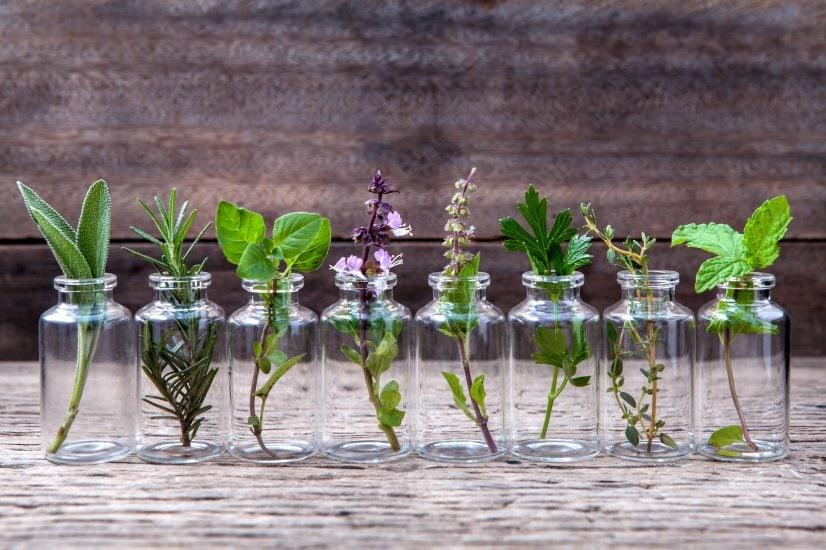 Rastliny a byliny