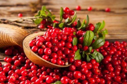 Brusnice: účinky na močové cesty, cena, tablety a čaj