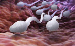 Tvorba spermií